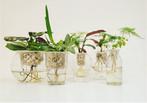 Maak kennis met hydrocultuur in glas